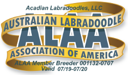Acadian-Labradoodles-LLC-ALAA-International-Logo-2019_2020